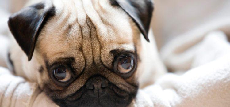 Oameni sau câini, veselie să fie