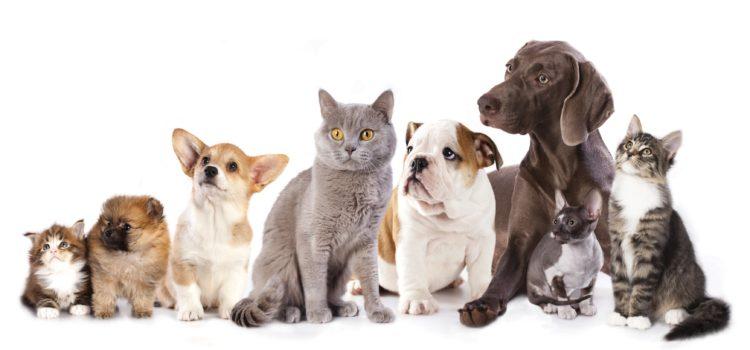 Invazie abuzivă de căţeluşi şi pisicuţe