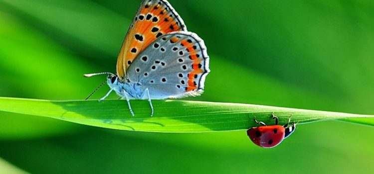 Poveste cu un buburuz trist și un butterfly amețit