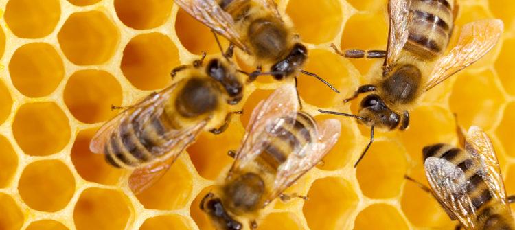 Albinuțe ocupate într-un stup vioi