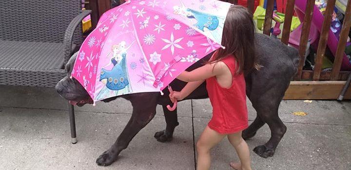 Medicul veterinar, bătrânelul și umbreluța roz cu prințese
