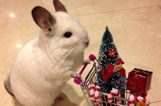 Un singur cadou per animal, vă rog!