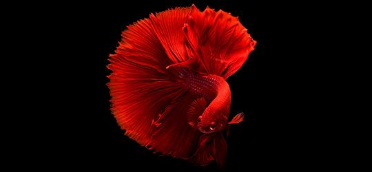 Peștișori incompatibili cu valorile noastre de viață