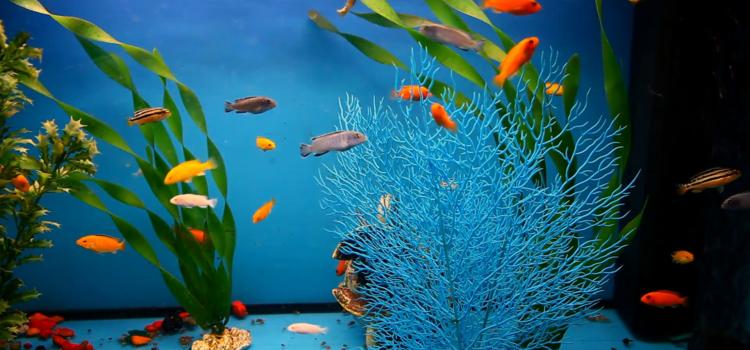 Fascinația acvariului și pasiunile păpădiei